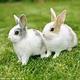 創作者 兔兔 的頭像