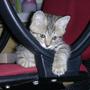 cat41456