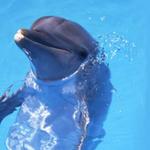 海豚公主Rita^_^~