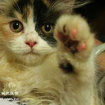 ilancat
