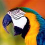 iPARROT