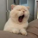 商業貸款 銀行 圖像