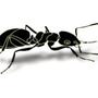 除白蟻專家