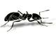 創作者 自製螞蟻藥 的頭像