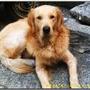 puppybeggy0831
