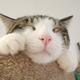 創作者 蜜柑猫 的頭像