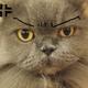 創作者 yatocat 的頭像