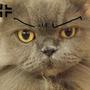 yatocat